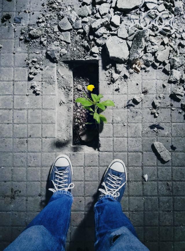 En lo profundo de sus raíces, todas las flores mantienen la luz...        Theodore Roethke . INTERSTICIOS #freetoedit #old #abandoned#ruins #decay #floor #selfshoe  #flower #urbex #urbexexploration #something #beautiful  and full of #hope💚 En lo profundo La esperanza fulgura.
