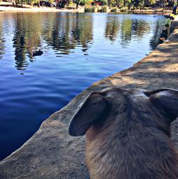 hikelife lakeside misty dogwalk view
