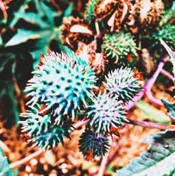 hikelife plantsandflowers spikey colorful hikingadventures
