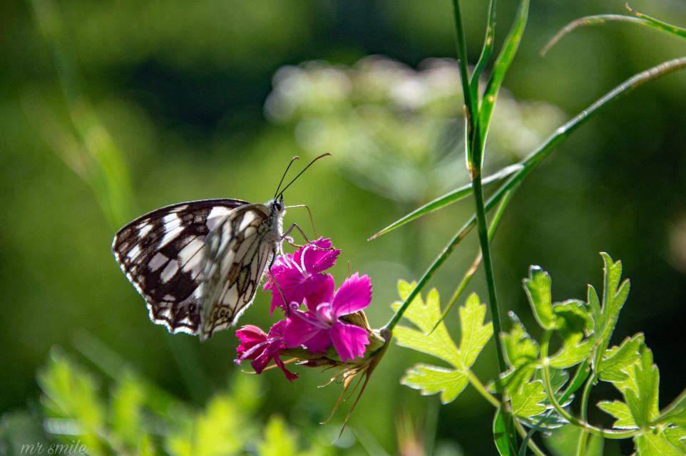 HAPPY SUNDAY DEAR FRIENDS💙😃👍👋#freetoedit #photography #nature #butterfly #naturephotography