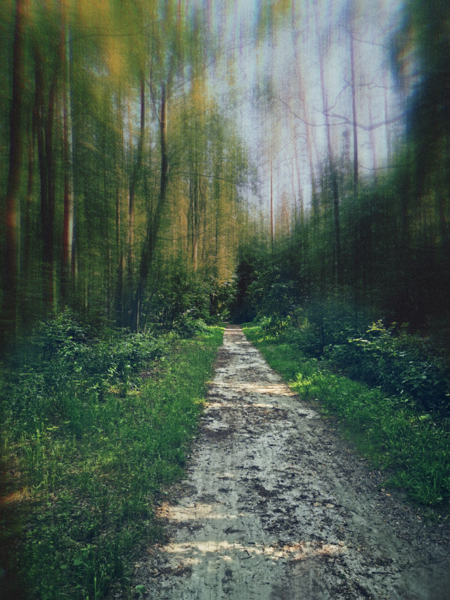 #freetoedit #summer #forest #woodland #beautifulday #trees #forestroad #landscape