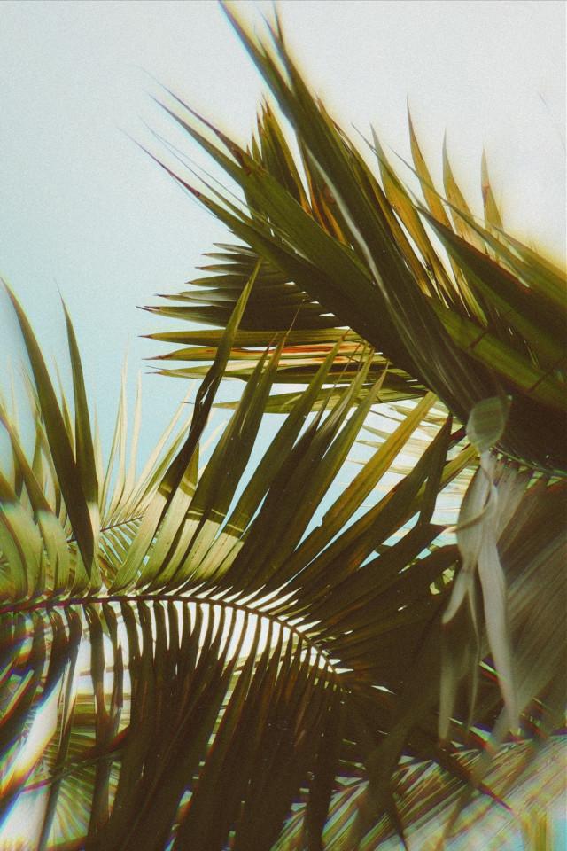 #wallpaper #magic #picsart #Olympus #photography #myedit #photooftheday #photo #view #edit #photo #photographyart #art #HappyWeek #perfect #green #blue #palmbeach  #freetoedit