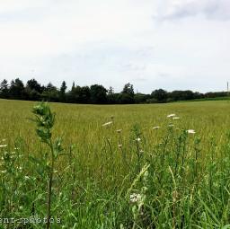 landscape natute field orient_photos