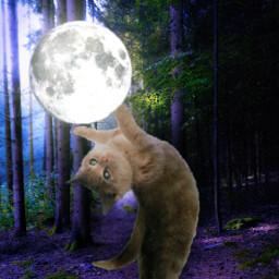 freetoedit surrealart surreal moon cat