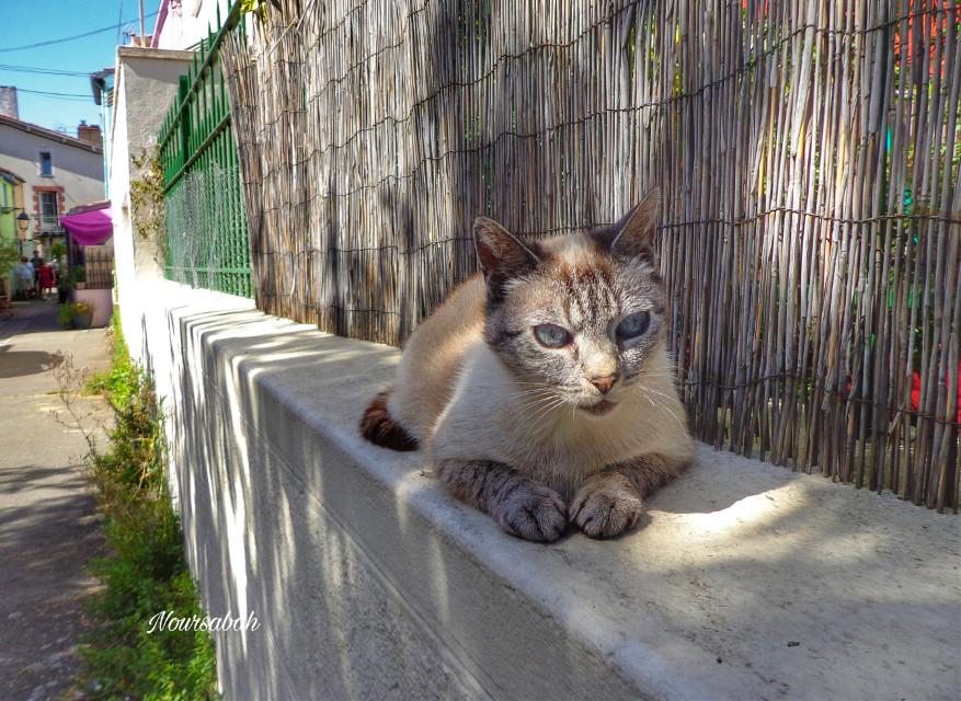 #cat #photography #beauty #pets #kittycat