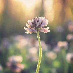 nature grass flowers singleflower grassflower freetoedit