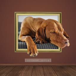 dog cute frame sleeping orient_arts freetoedit ftestickers