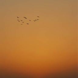 serenity thesungoesdown horizon sunsettime goldenhour freetoedit