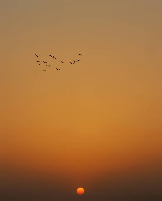 #serenity #thesungoesdown on the #horizon #sunsettime #goldenhour #birdsinflight #silhouettes                                             #peaceful and #quitetime #contemplationmoments                                                          #simplicity #nature #simplequietlove #sunsetphotography                                                                                                                                                #freetoedit