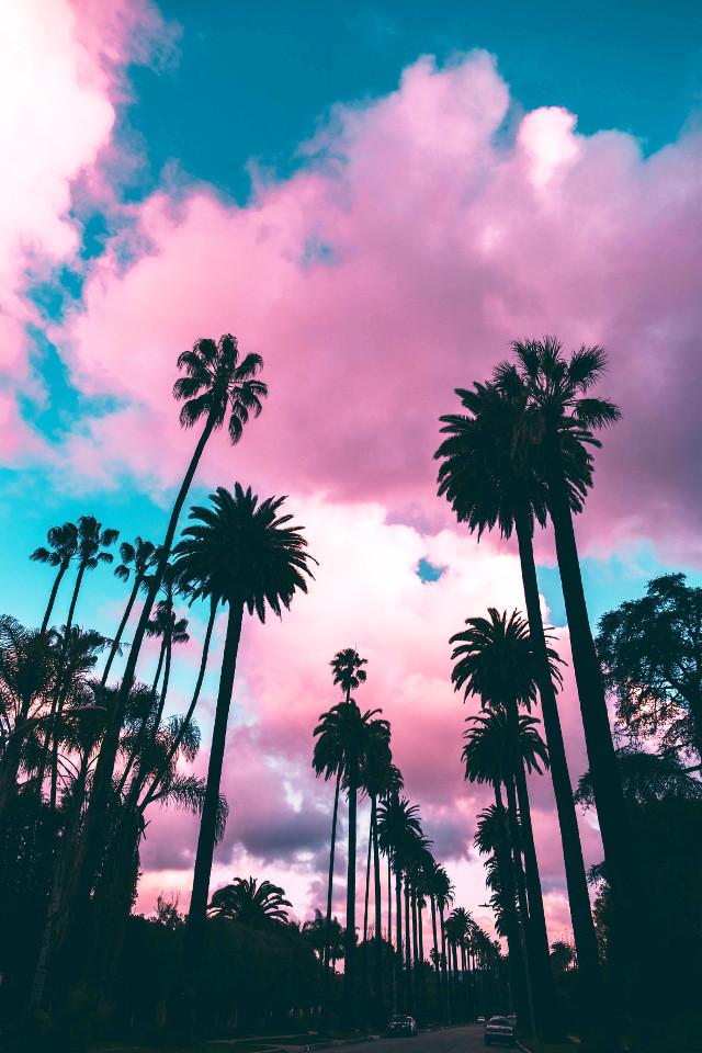 ★彡  ᴏᴘ ꜰʀᴏᴍ ᴜɴꜱᴘʟᴀꜱʜ (ʀᴏʙᴇʀᴛᴏ ɴɪᴄᴋꜱᴏɴ) 🌸   #background #wallpaper #beachlife #unsplash #freetoedit #remixit #palmtrees #pink #remixme #picsart #landscape #photography