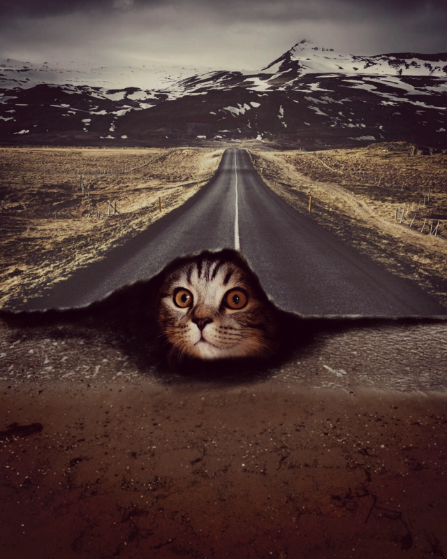 Watch tutorials👉https://youtu.be/pYv7z2qQO5E             ???#highway #dtsdk @dtsdk @picsart #mountains #art #freetoedit #cats #cuteanimals #sleepunderroad #nature #sleepundercovers #sleepundersea #cute #coolpic💖 #awesome #doubleexposure #hide #remix #remixgalleries #cutest  #irckittylove #kittylove