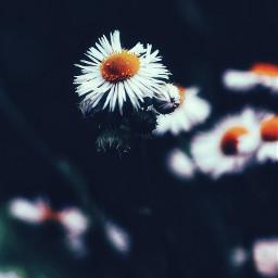 myphotography nature flowers flower plants freetoedit