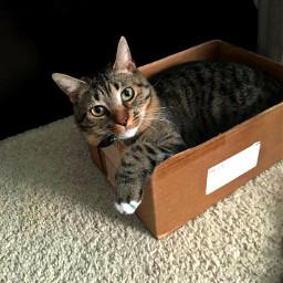 cat kitty catsofpicsart cute myphotography