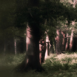 forest trees lightandshadow magicalforest