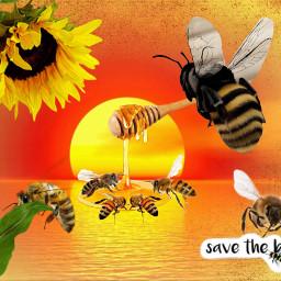 freetoedit bees honey enviroment sunflower