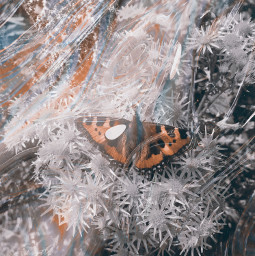 butterfly photography myphoto iloveit colors