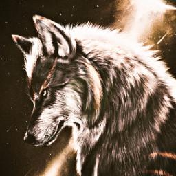 wolf cool epic amazing beutiful freetoedit