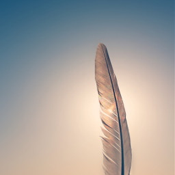 summertime feather againstthelight seaview hotweather freetoedit
