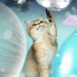 freetoedit pets madewithpicsart planets kitten