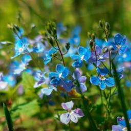 freetoedit meadow flowers nature