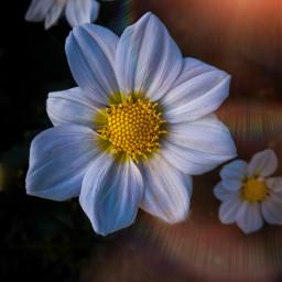freetoedit flora floral flower nature