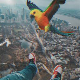 papagei urban travel bird freetoedit
