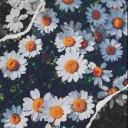 freetoedit challenge flowers naturalbeauty blackwhite
