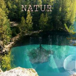 freetoedit natur forest trees live
