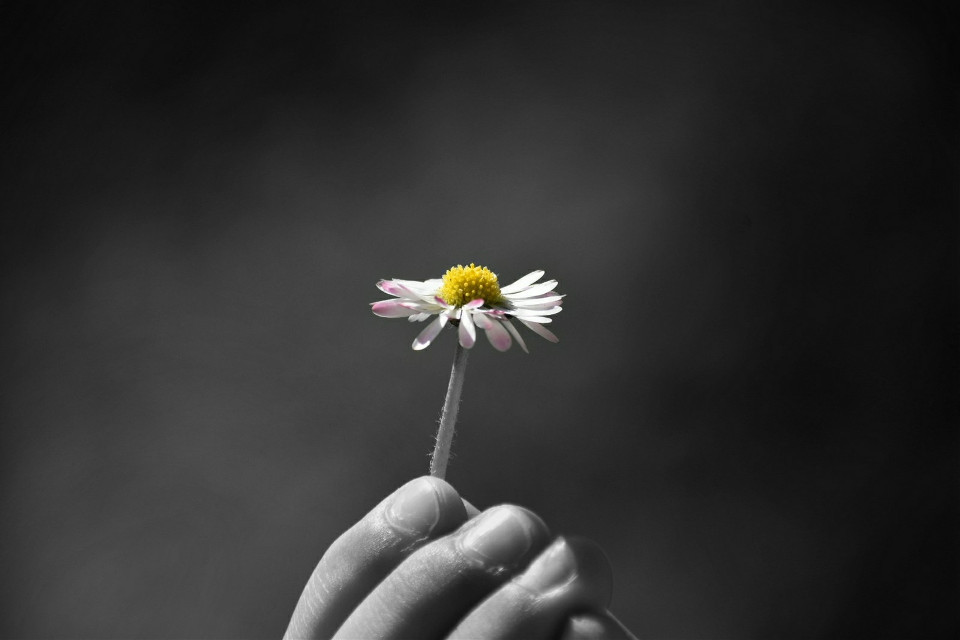 🖤 Never give up on the things that make you smile 😊 a daisy from the hands of my little angel❤   #freetoedit #love #blackandwhite  #coloursplash #picsarteffects