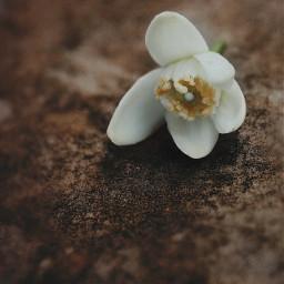 flower naturesbeauty simple tinyflower surface freetoedit