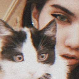 cat catslover cateyes catlove cats freetoedit