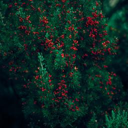 forest nature naturephotography photography green freetoedit