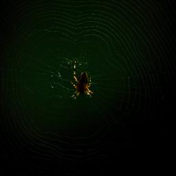 freetoedit spider animals wildlife forest