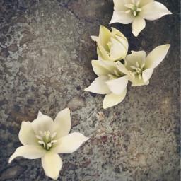 flowers naturesbeauty cactusflowers flatlayphotography freetoedit