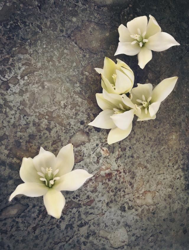 #flowers #naturesbeauty #cactusflowers #flatlayphotography   #freetoedit