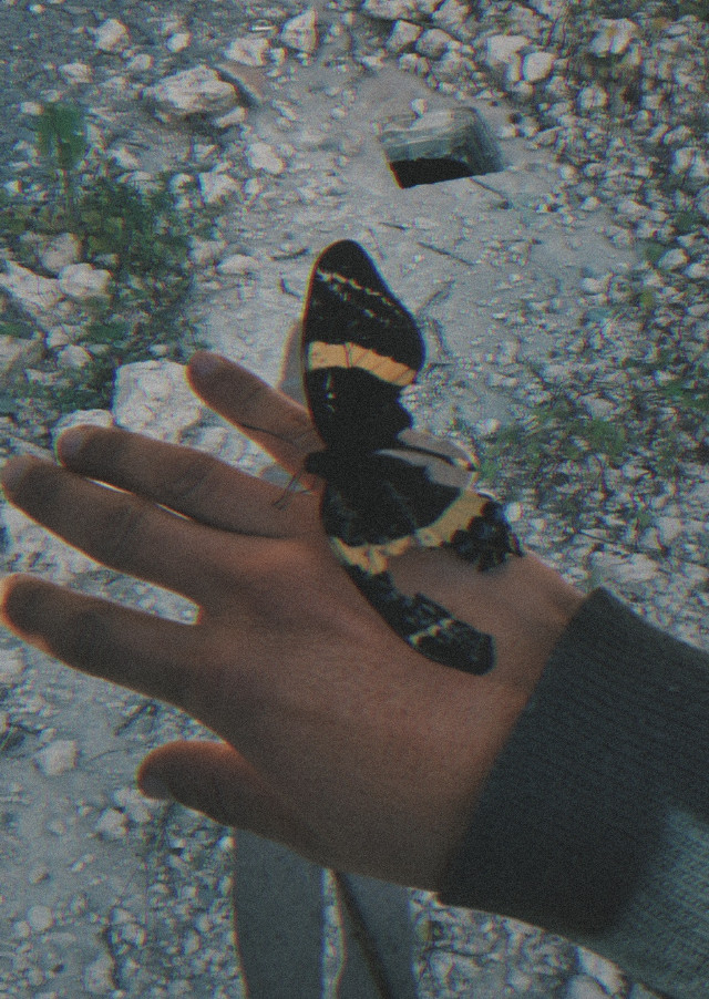 https://m.youtube.com/watch?v=FZPA15zUzIY #butterfly #brokenwing