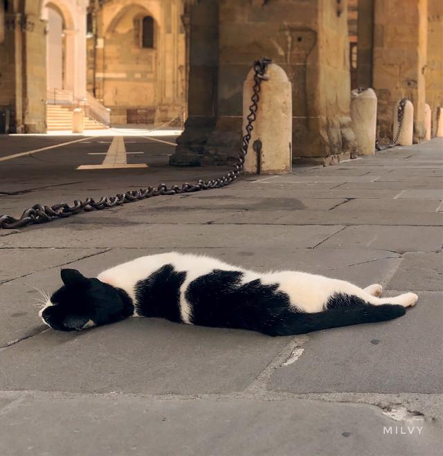 """cat nap""🐈""pisolino""😴😪💤 #Italy ❤️#Bergamo #myphoto #shotoniphone #photography #ancientcity #ancientarchitecture #medievalarchitecture #summer  #naptime #catnap #catslover #kitten #cat #gatto"