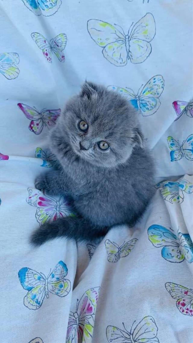 #cat #animals #cats #animal #pets #cute #funny #like #like4follow #likesforlikes #like4like #likes #follow #followforfollow #picsart #followme