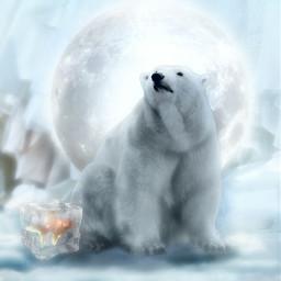 freetoedit frozen fish moonlight moon animal polarbear ice white surreal editedwithpicsart light freeze unsplash
