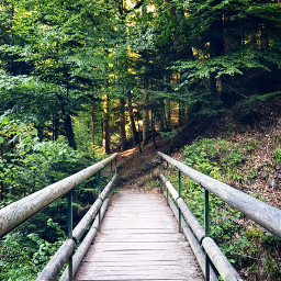 freetoedit forest bridge photography blackforest