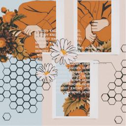 honeycomb orangeaesthetic beigeaesthetic pastelcolors pastelaesthetic vintageaesthetic flowers retro collage collageedit collageart digitalcollage creativeedit freetoedit