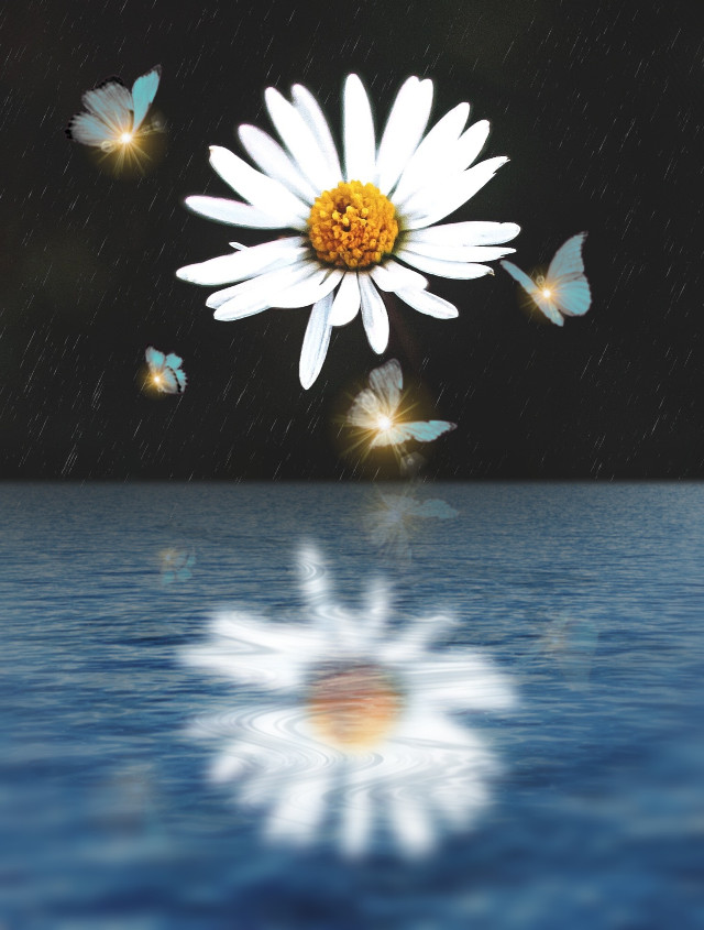#freetoedit#replay #picsartreplay  #myedit #editebyme #madewithpicsart #reflection #creative #flower #butterfly #araceliss #picsart #picsarteffects #editedbyme #mirroreffect