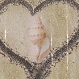 freetoedit seashell heart ircseatreasure seatreasure
