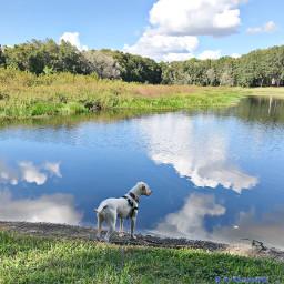reflectionsofwater dog pcwaterreflection waterreflection