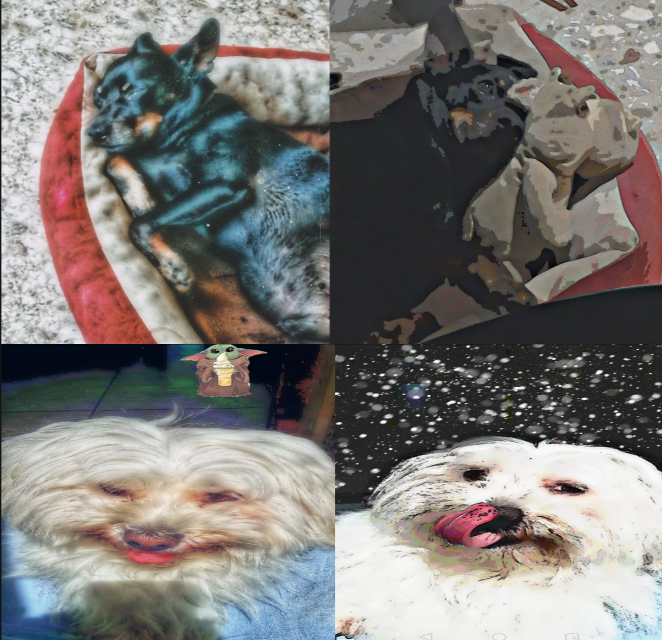 #freetoedit #madewithpicsart #collage #dogs #pets #mydog #dogsofpicsart #cute #cutenessoverload #furbabylove #paws #instapaws #pinscher #maltese #fluffy #woof #bork