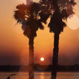 freetoedit summer sunset palmtrees picsarteffects
