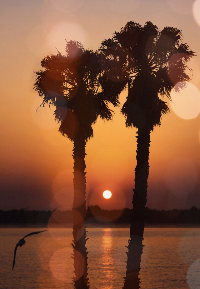 #freetoedit #summer #sunset #palmtrees #picsarteffects #shadowmask #bokehmask #stickeroverlay  #doubleexposure #myedit #madewithpicsart beautiful Op by