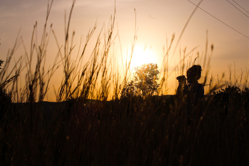 📸 #freetoedit #summer #sunset #photography #picoftheday #cute #photo #photographyart #people #orange #forest #wild