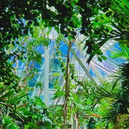 greenminimalism gardenphotography naturephotography nature picsart freetoedit