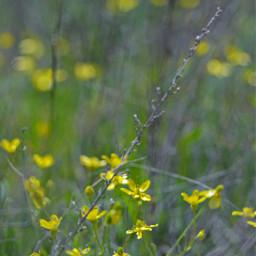 freetoedit summer summerflowers yellowflower summerbackground floralbackground